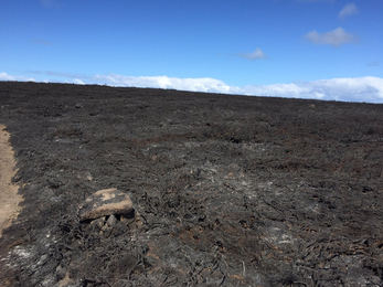 The aftermath of the Bartinney Downs Nature Reserve Fire