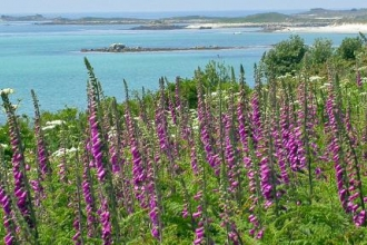 Praise for new Isles of Scilly botanical book