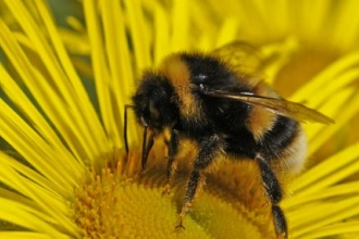 Help needed to save our Cornish bees
