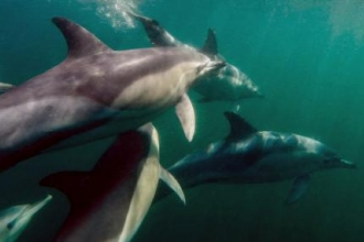 Bags of Help for Cornish Dolphins