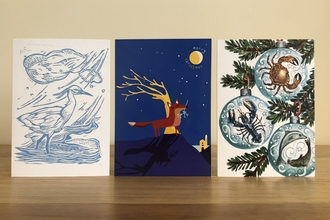 Line up of Cornwall Wildlife Trust's illustrated Christmas cards