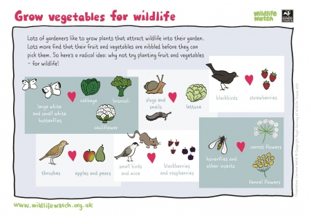 Grow vegetables for wildlife with Wildlife Watch