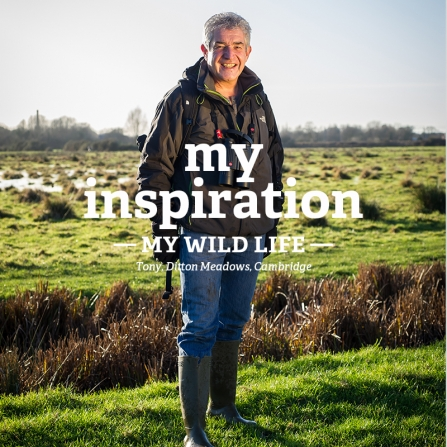 Tony Juniper - My Wild Life