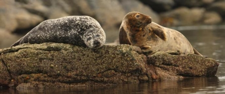 a common and grey seal by Ian Mccarthy 0