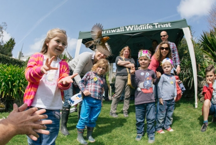 Celebrate Cornwall's wildlife with the Trust