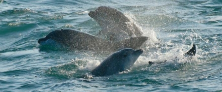 First ever Southwest Bottlenose Dolphin Forum being held in Cornwall