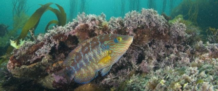 New national report calls for seven new marine protected areas off Cornish coast