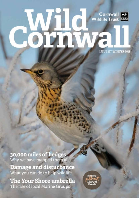 Wild Cornwall - Issue 137 - Winter 2018