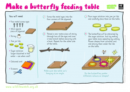 Make a butterfly feeding table
