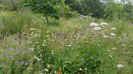 A bed of wildflowers near Saltash, East Cornwall