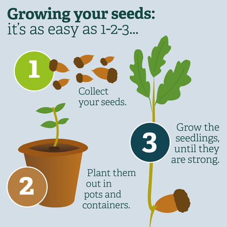 Growing your seeds is as easy as 1-2-3