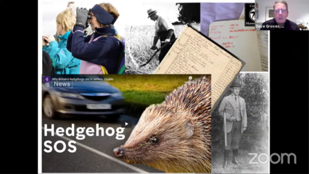 Hedgehogs are in serious trouble