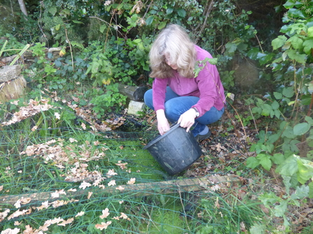 Rowena collecting acorns and oak leaves in a bucket
